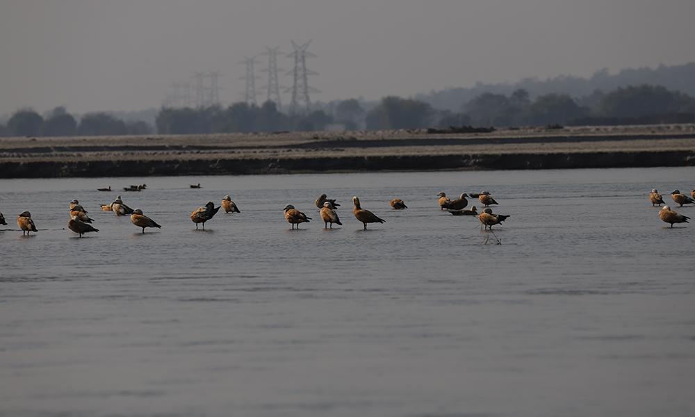 'पानी, सिमसार र जीवन' नाराका साथ सिमसार दिवस मनाइँदै