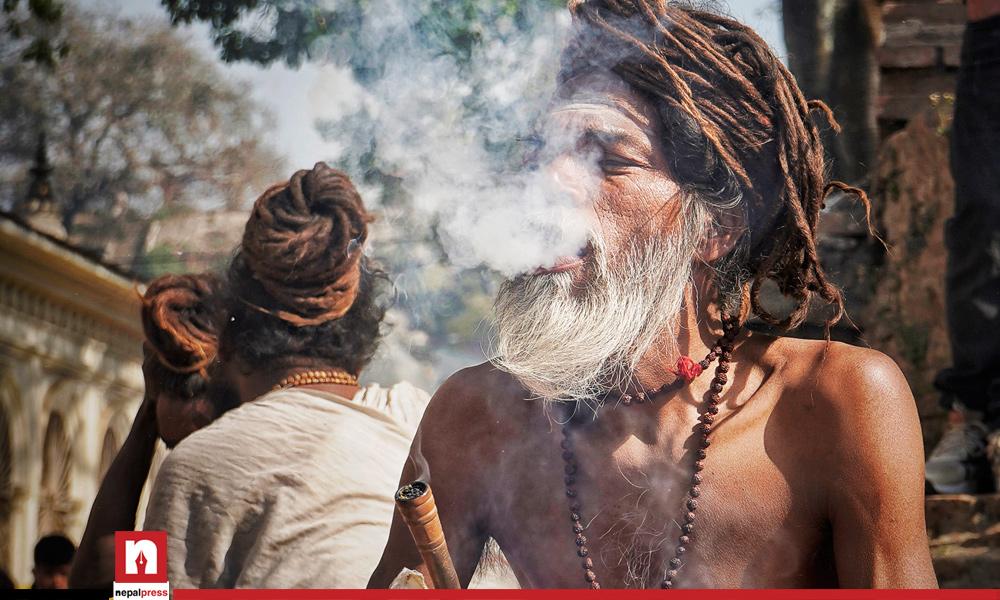 गाँजाको बहस नेपालदेखि बेलायतसम्म : यस्ता छन् 'गाँजाप्रेमी'का तर्क
