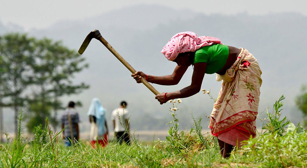 कृषि आधुनिकीकरणका नाममा १० अर्ब खर्च, उपलब्धी नगन्य