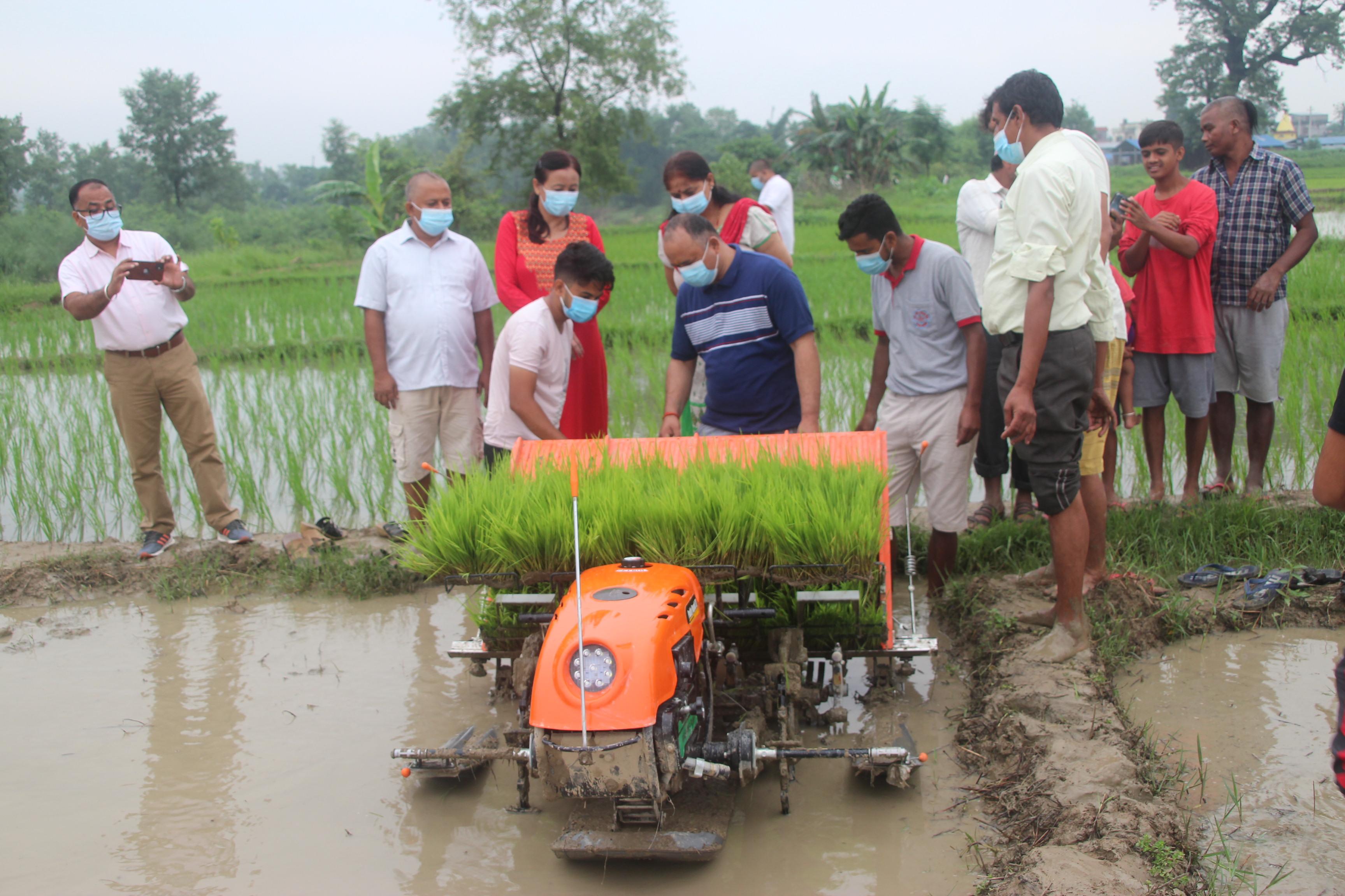 मेशिनले धान रोपेपछि स्थानीय दंग, चक्लाबन्दी गर्ने किसानलाई १० हजार अनुदान