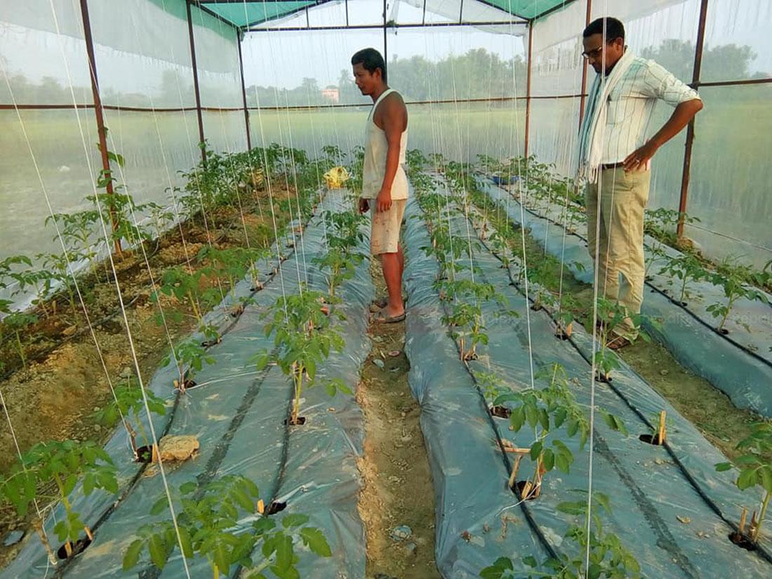 बुटवलमा प्रभावकारी बन्दै सहरी कृषि प्रवर्द्धन कार्यक्रम, विदेशिन लागेका युवा गाउँमै बने स्वरोजगार
